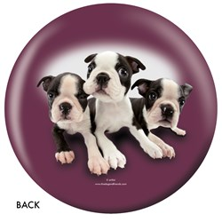 OnTheBallBowling Boston Terrier Back Image